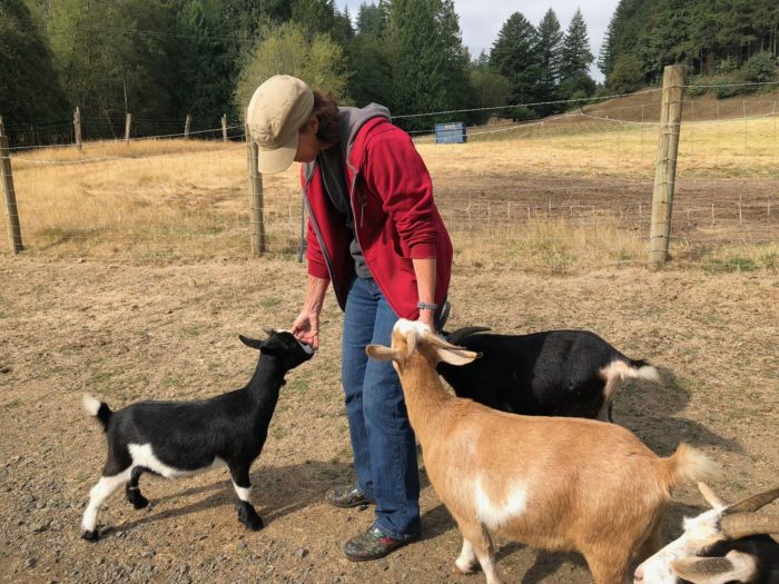 Leaping Lamb Farm FarmStay USA Guest