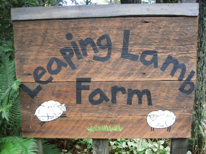 Leaping Lamb Farm